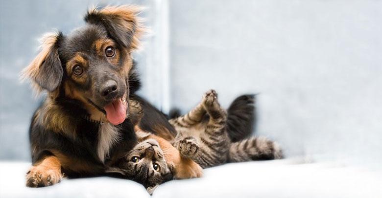 حیوانات آپارتمانی