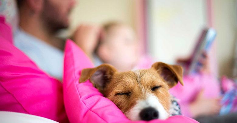 فواید نگهداری حیوانات خانگی