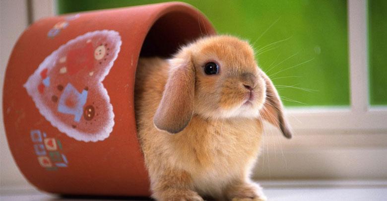 پت شاپ خرگوش
