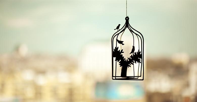 قفس پرندگان خانگی