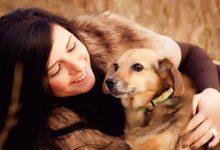نقش حیوانات در زندگی انسان