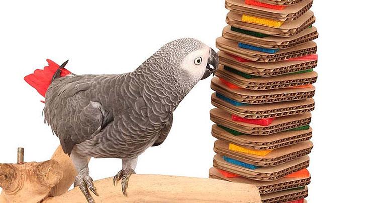 بیماری در پرندگان زینتی