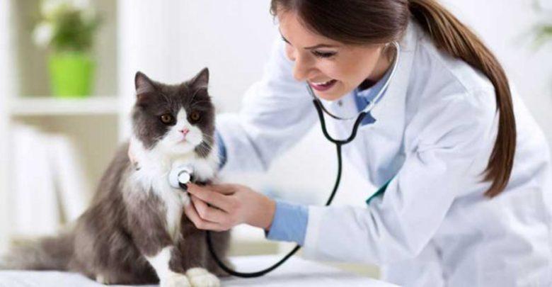 بیماری حیوانات