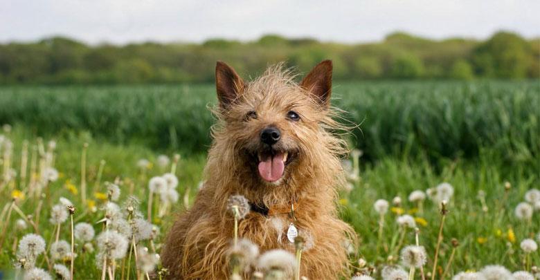 انواع بازی با سگ