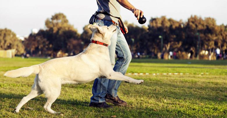 آموزش فرمان پذیری سگ