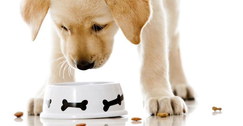 رژیم غذایی حیوان خانگی