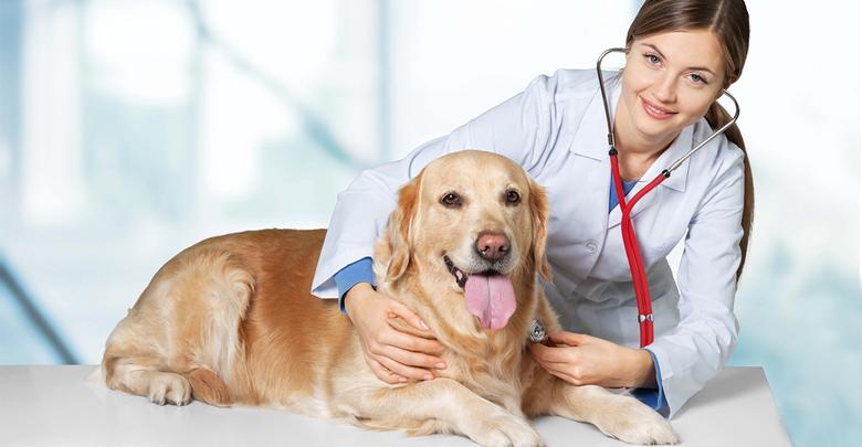 سلامت حیوان خانگی