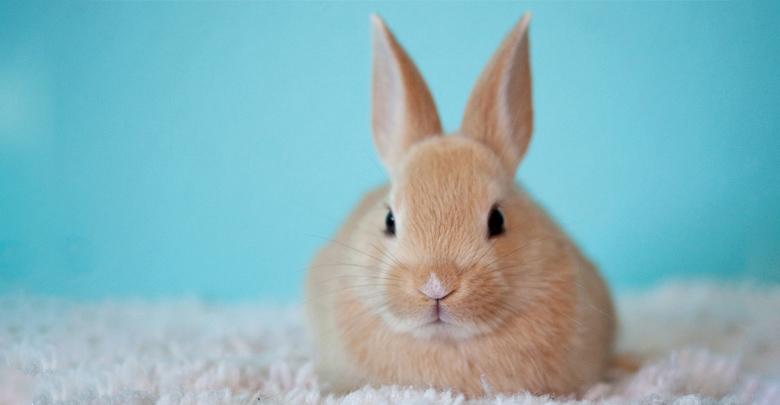 نگهداری خرگوش خانگی