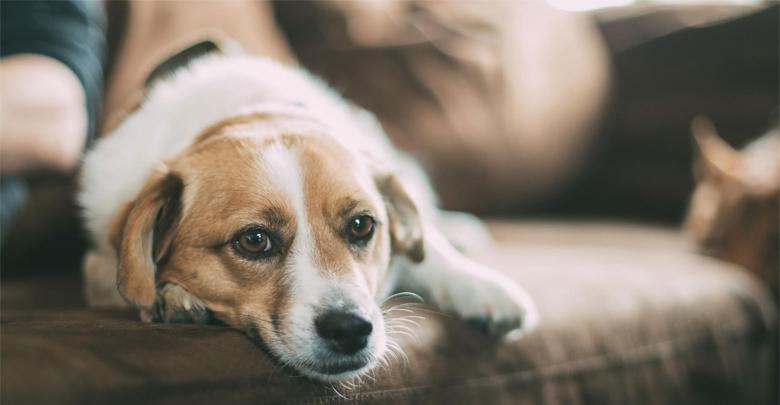 نگهداری سگ های آپارتمانی