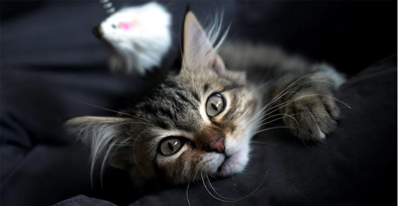زندگی گربه