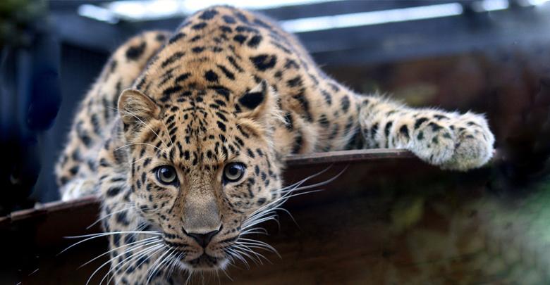 نادرترین حیوانات جهان