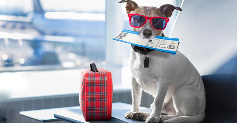 شرایط بردن سگ به خارج از کشور
