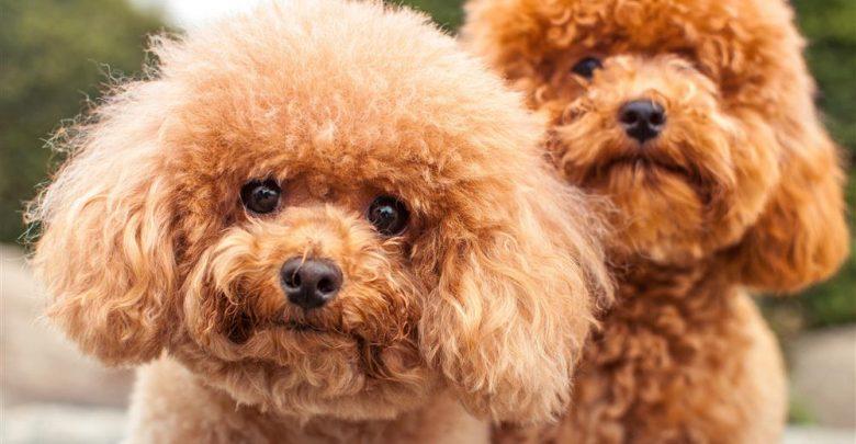 انتخاب نام برای حیوان خانگی