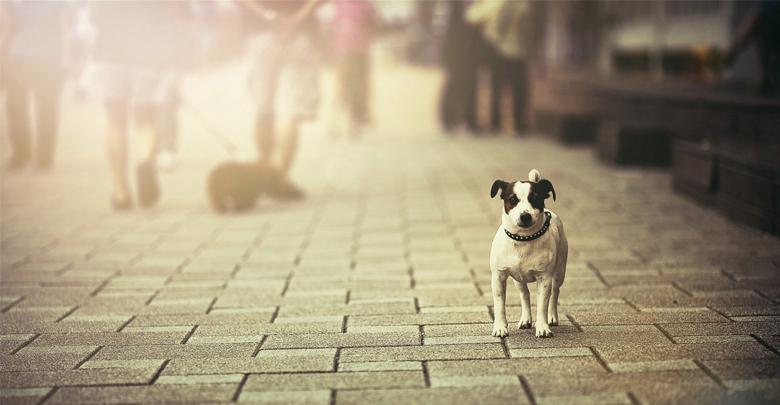 حیوانات خیابانی