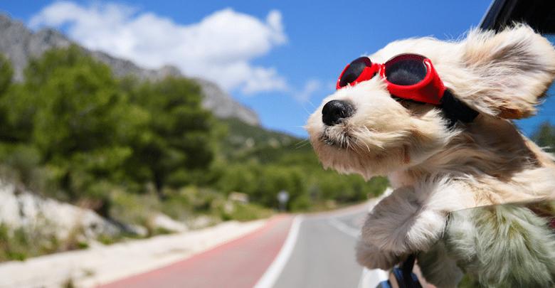 مسافرت با سگ