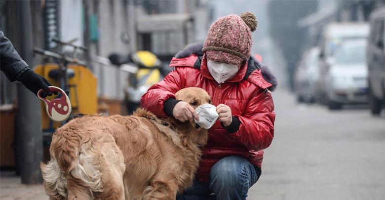 اثرات آلودگی هوا بر حیوانات خانگی