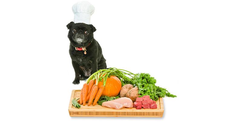 غذای سگ خانگی