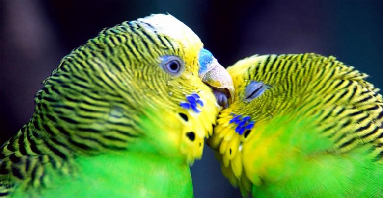 محل مناسب برای نگهداری پرندگان