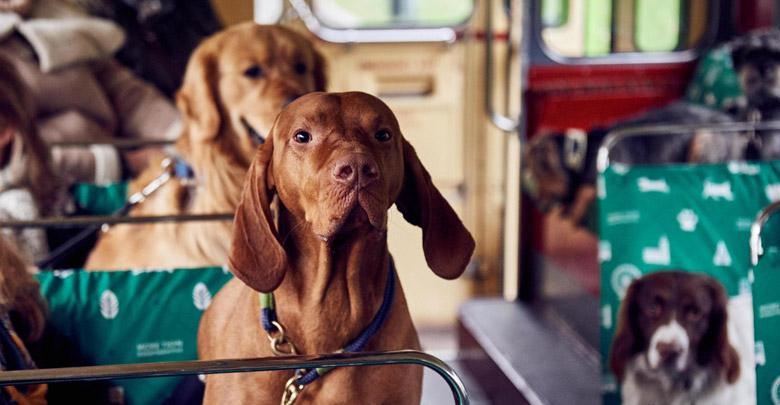 حمل سگ با اتوبوس