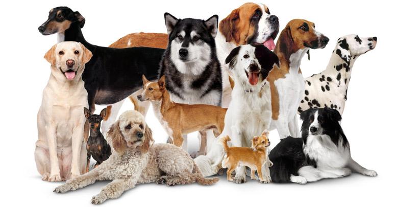 انواع نژاد سگ خانگی