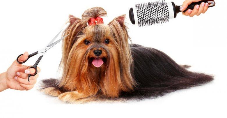 ریزش موی حیوانات خانگی