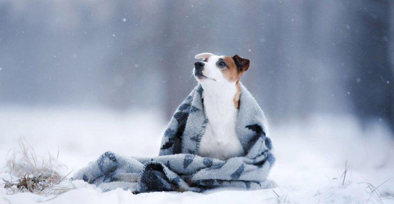 نگهداری سگ در باغ و حیاط در فصول سرد