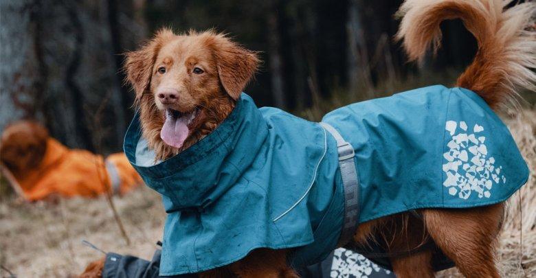 مقاومت سگ در سرما
