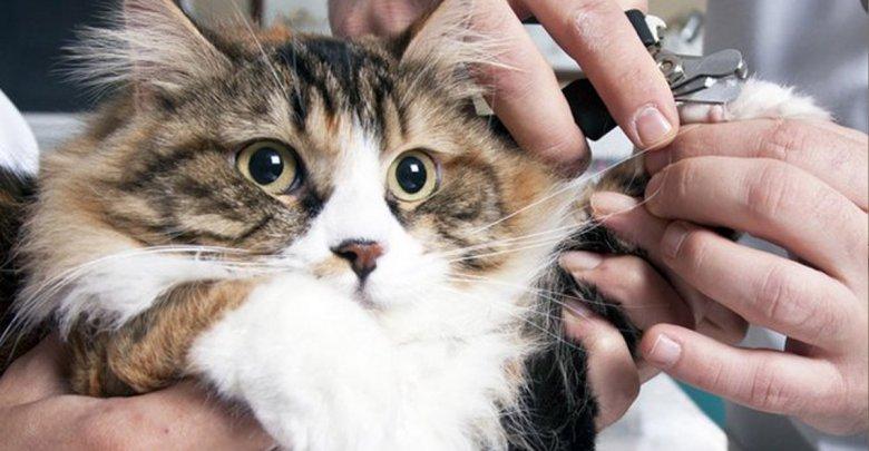 شیوه کوتاه کردن ناخن در سگ ها و گربه ها