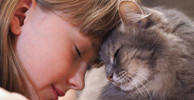درباره زبان بدن گربه ها چه میدانید؟
