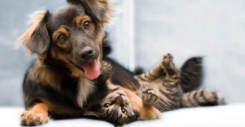 نیاز به مولتی ویتامین ها در حیوانات خانگی
