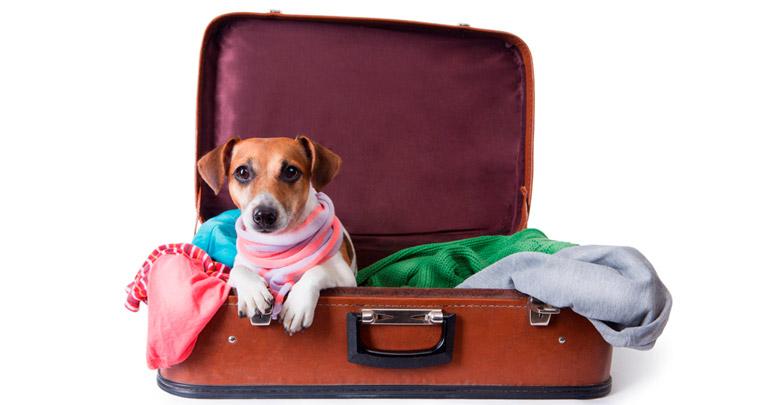 مشکلات سفر با حیوان خانگی