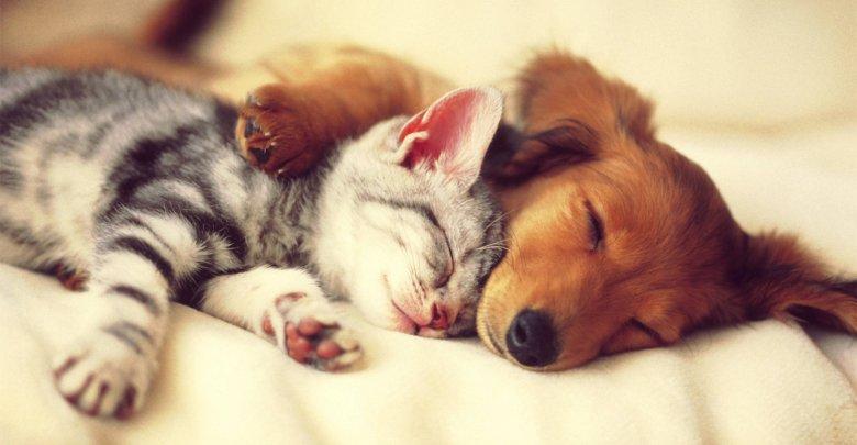 چگونه سگ و گربه خود را با هم آشنا کنیم