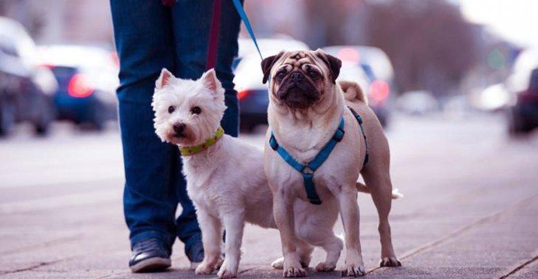 برای پیاده روی با سگ در ایام کرونا چه کنیم؟