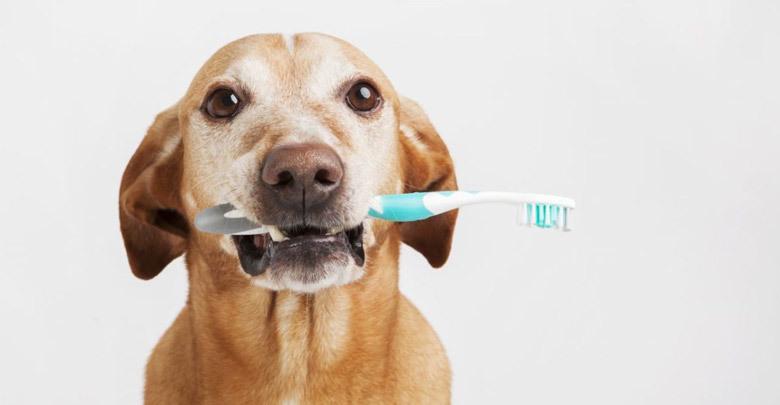 آموزش مسواک زدن به سگ
