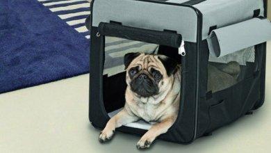 قفس و باکس نگهداری حیوانات خانگی