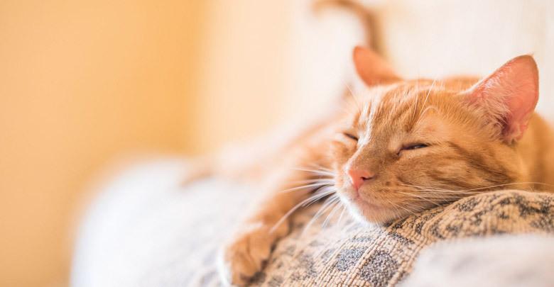 محبوب ترین نژادهای گربه