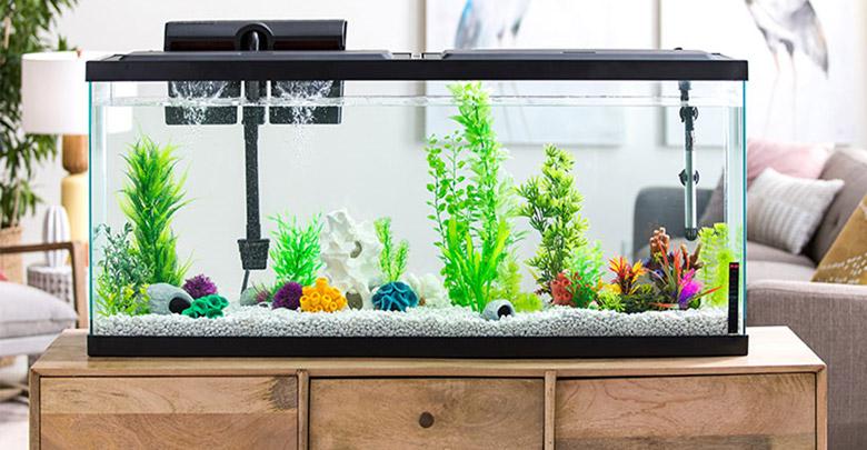 آکواریوم ایده ال برای ماهی ها