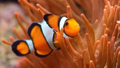 انواع ماهی های آکواریومی