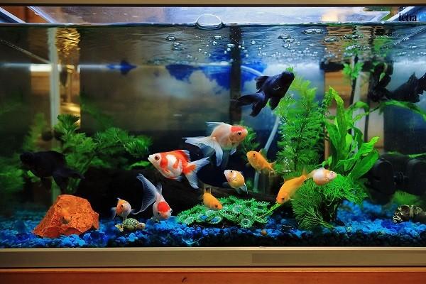 بیماریهای شایع در ماهی های آکواریومی