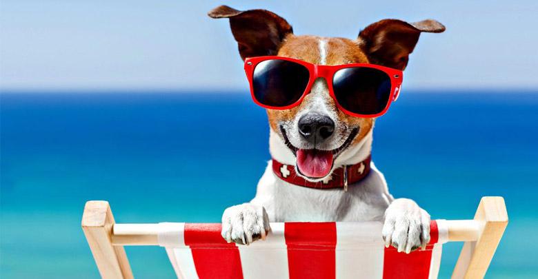 خنک کردن سگ در تابستان