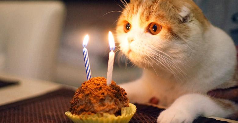 طول عمر گربه