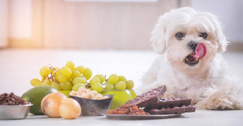 رژیم غذایی مناسب برای سگ ها
