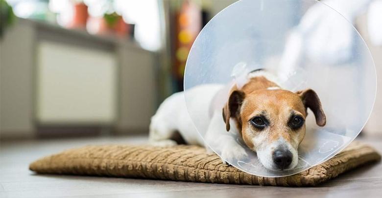 جراحی زیبایی در حیوانات