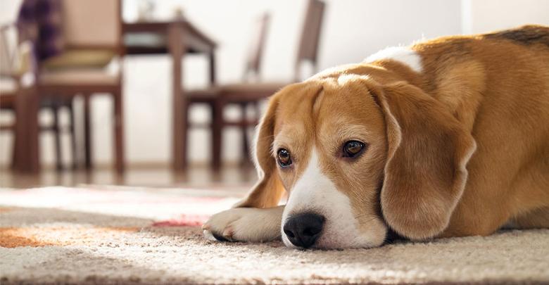 درمان سنگ مثانه سگ و گربه