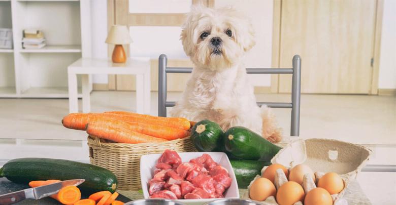 دستور غذایی سالم برای سگ ها