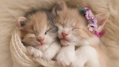 میزان خواب در گربه ها