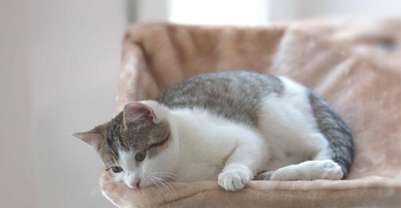 علت گوشه گیری گربه