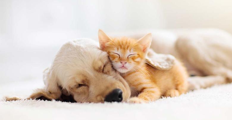 فرهنگ نگهداری از حیوانات خانگی