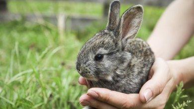 آموزش نگهداری صحیح از خرگوش