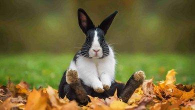 بیماریهای شایع در خرگوش ها